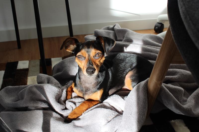 Futzi Agenturhund